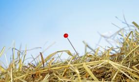 View of a needle in a haystack